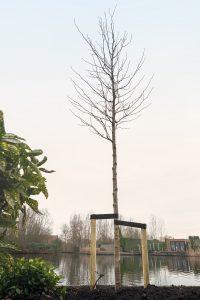 Planten bomen