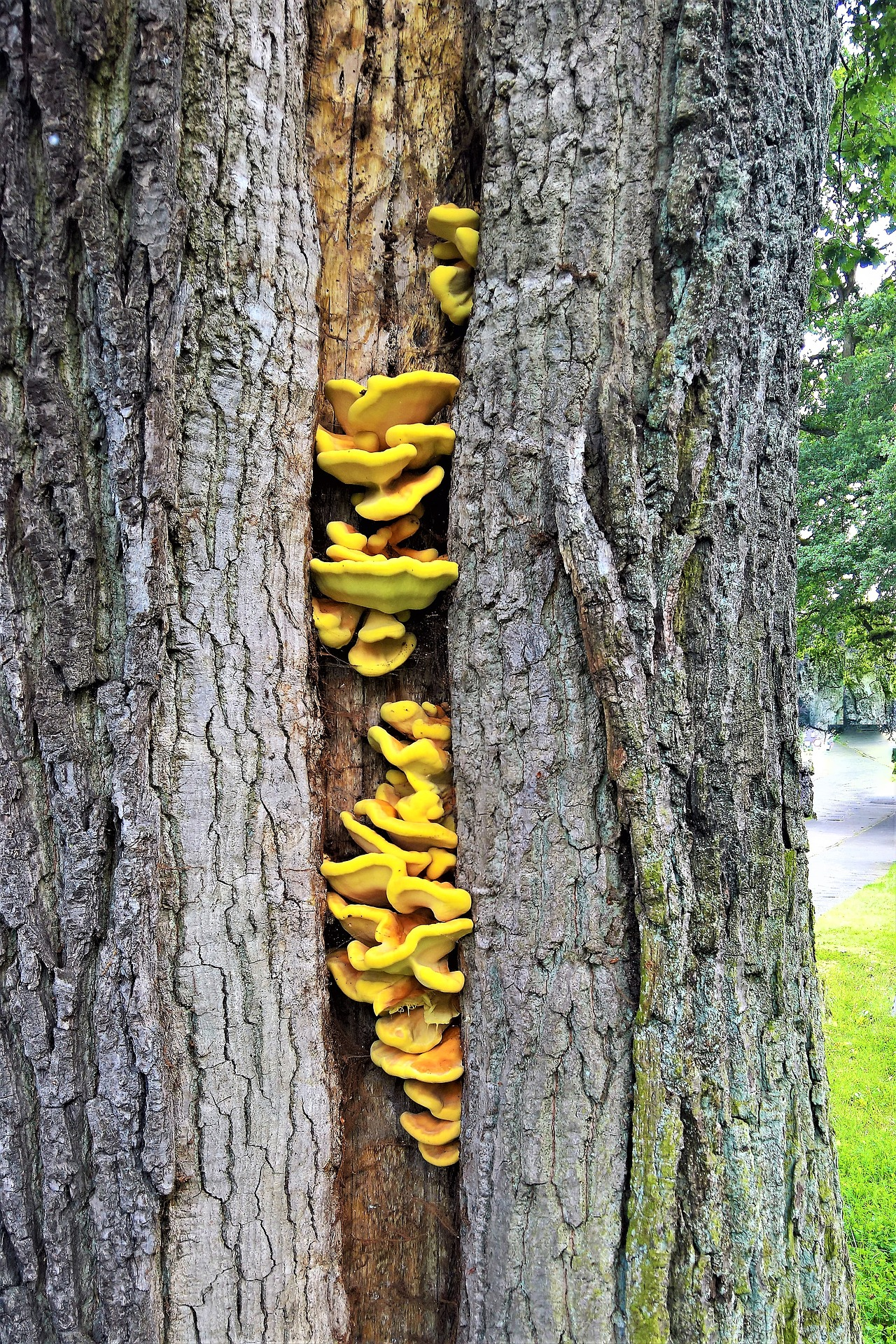 Voorbeeld schimmel boom